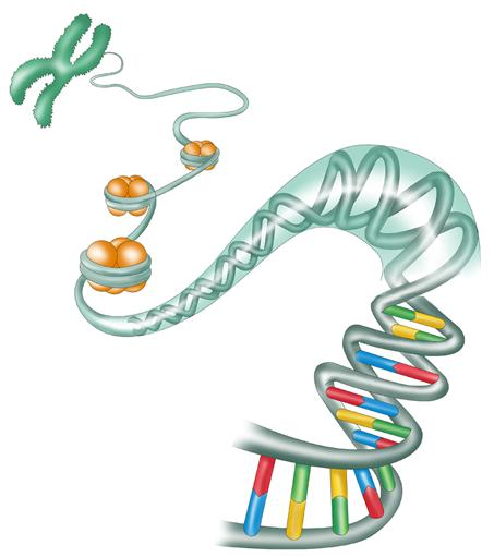 All Wales Medical Genetics Service - What is Genetic Testing?